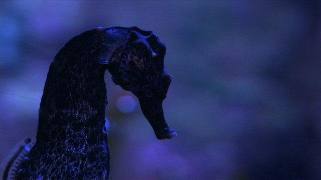 La proie pour l'ombre - Image ABAC